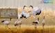 帶你玩轉秋日美景  江蘇四市在佛山舉辦旅游推介會