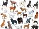 禁养烈性犬!顺德划定养犬管理城市市区区域范围