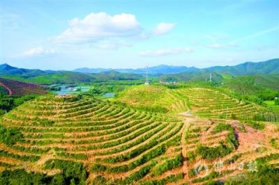農村集體產權制度改革吹響沖鋒號角 高明已完成176個股份制改革任務