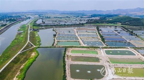 高明計劃完成4000畝養殖池塘標準化改造 精養嬌貴魚